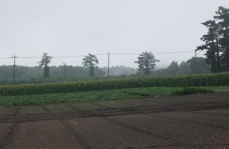 20110816_3bonmatsu