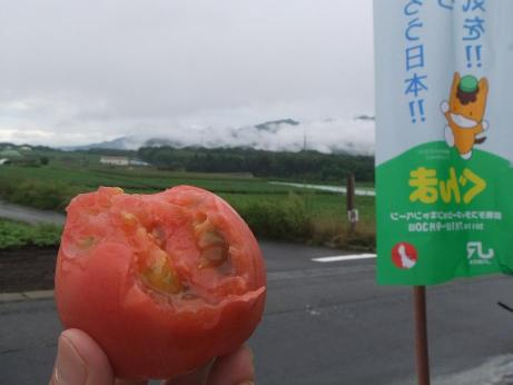20110818_tomato2