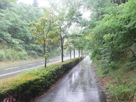 20110830_access_road