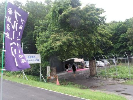 20110827_blueberrynomori1_2