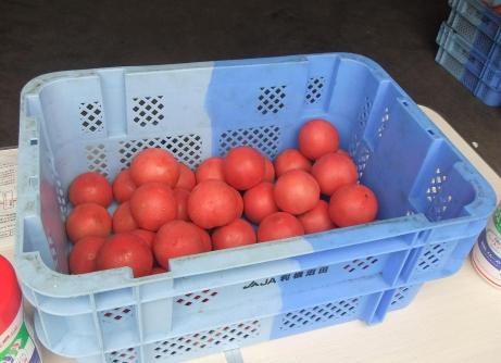 20110827_tomato2