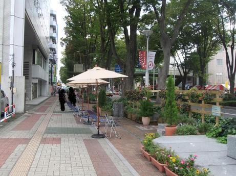 20110912_keyaki_namiki