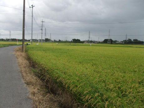 20110921_tanbo1