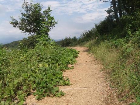 20111013_foot_path4
