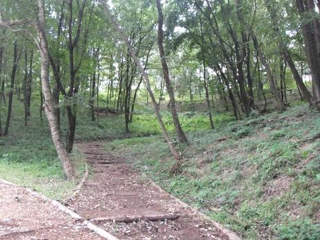 20111013_foot_path5