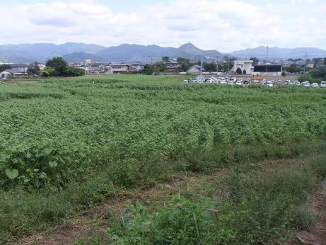 20111013_himawari_batake