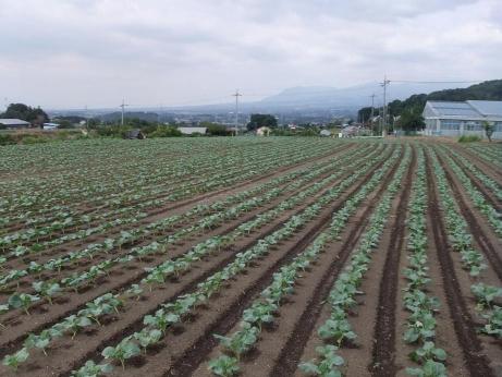 20111013_yasai_batake1
