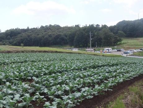 20111013_yasai_batake2
