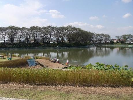 20111016_shikanokawanuma