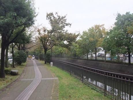 20111106_sakariver_midorinomichi1