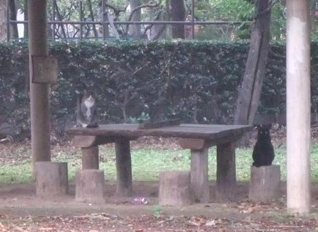 20111108_cat