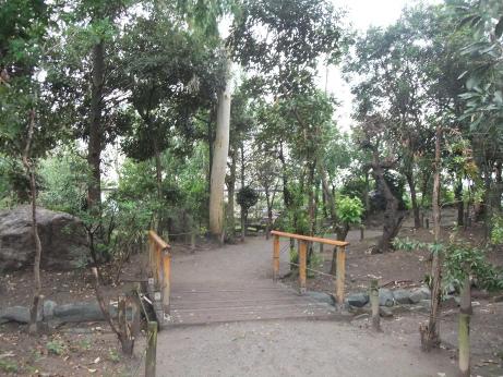 20111108_yachounomori2