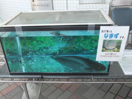 20111109_namazu