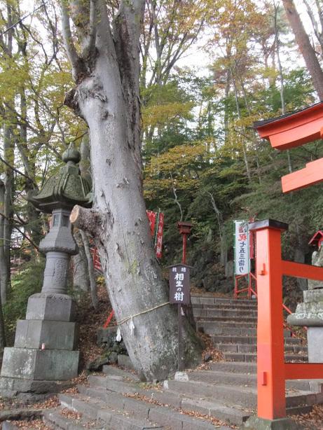 20111122_aioinoki2