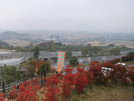 20111123_momiji