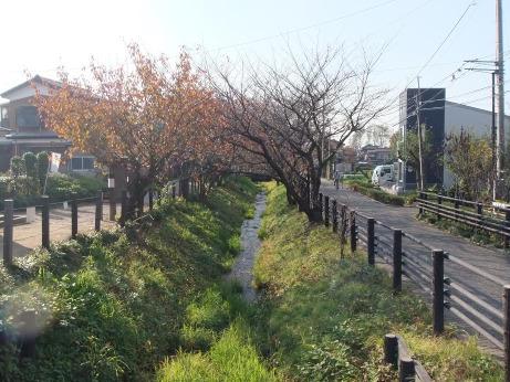 20111213_minuma_tsusenbori1