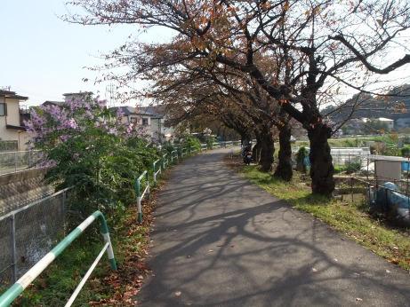 20111214_flower1