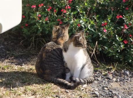 20111221_cat