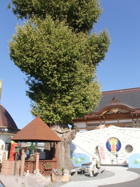 20111223_seifukuji