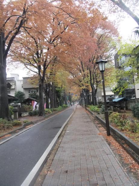 20111225_hikawasandou2