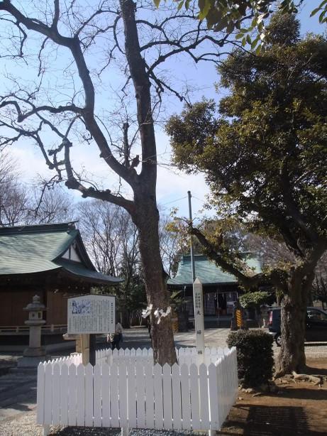 20120316_meotogaki1