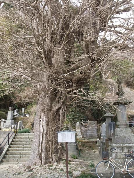 20120325_tree_2