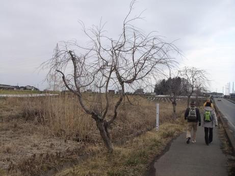 20120402_sanmaijyou2