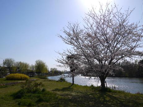 20120410_misato_park02