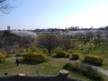 20120410_misato_park04
