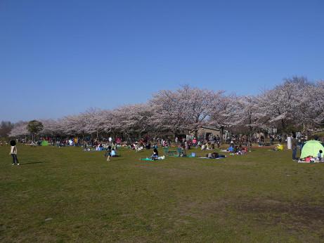 20120410_misato_park08