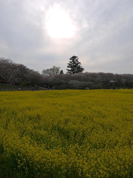 20120417_gongendou09