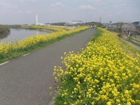 20120420_nanohana03