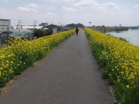 20120420_nanohana08