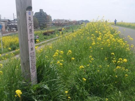 20120420_yakkawaranowatashiato