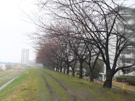 20120426_nakagawa_dote