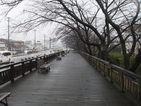 20120426_sakura_dori