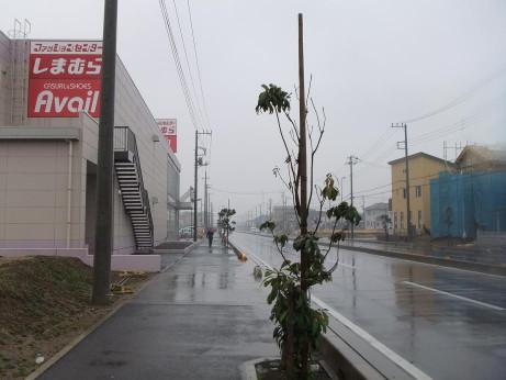 20120426_shimamura