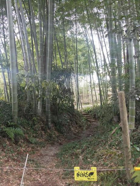 20120428_chikurin