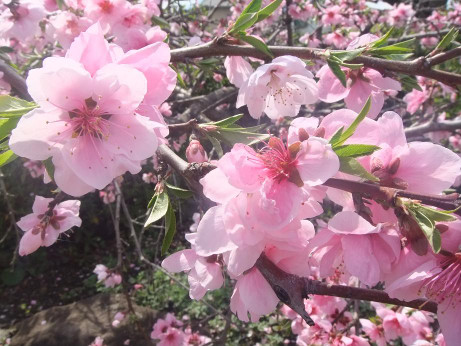 20120517_flower