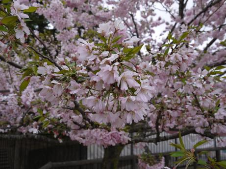 20120524_shiroyama_park04