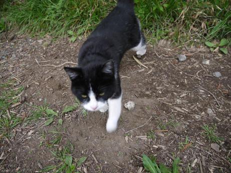20120531_cat1