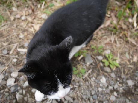 20120531_cat2