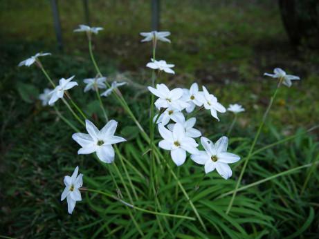 20120602_flower