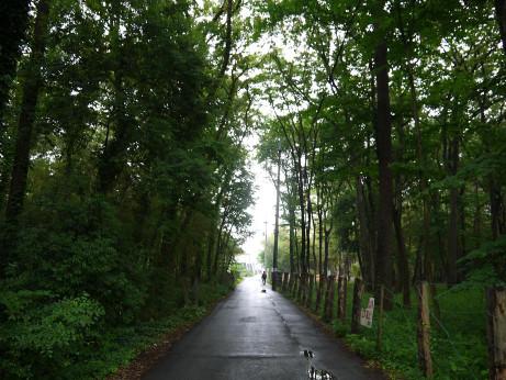 20120703_road01