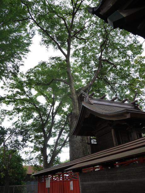 20120703_tatibana_jinjya3