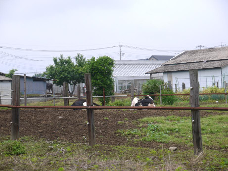 20120703_ushi