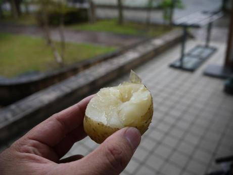 20120708_jyagaimo