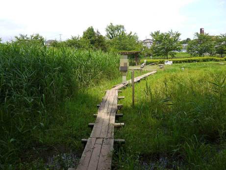 20120711_negiuchi_rekishi_park07_2