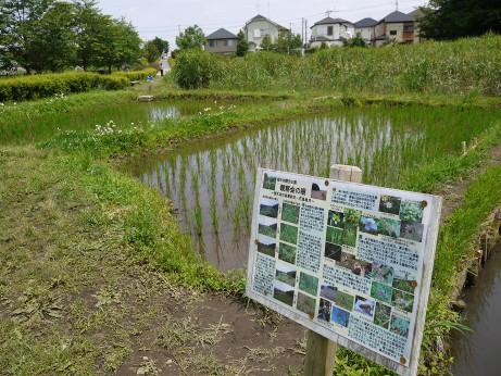 20120711_negiuchi_rekishi_park09
