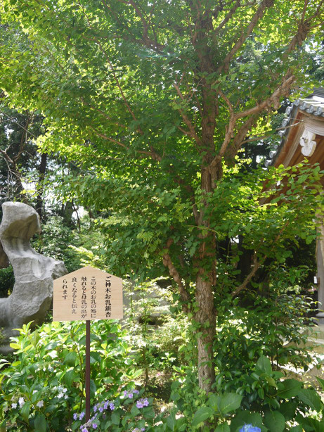 20120722_ichou